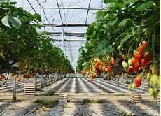 production et culture de la fraise fraises label