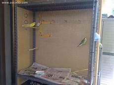 gabbie fai da te gabbia fatta in casa cocorite e pappagallini ondulati