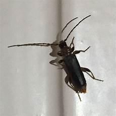 Was Ist Das F 252 R Ein Insekt Bei Uns In Der Wohnung Tiere