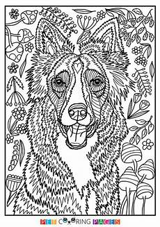 Ausmalbilder Hunde Border Collie Free Printable Border Collie Coloring Page Available For
