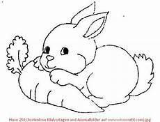 Ausmalbilder Tiere Hasen Malvorlagen Kostenlos Hasen Ausmalbilder