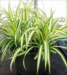 Pflanzen Für Dunkle Ecken In Der Wohnung - what indoor plants need light interior design