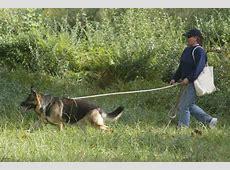 Tracking ? American Kennel Club