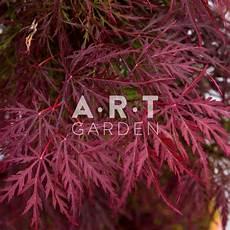 acer palmatum dissectum garnet arbre tres
