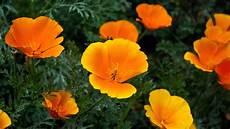 Iphone Orange Flower Wallpaper