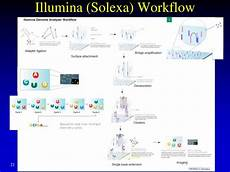 illumina solexa ppt genome sequencing and assembly high throughput
