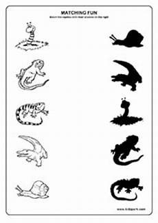 14 best images of reptile worksheets for kindergarten preschool reptile worksheets preschool