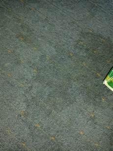 Hund Pinkelt Aus Teppich Fleck Entfernung Wasserfleck