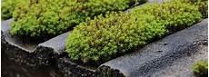Dachreinigung So Wirst Du Algen Flechten Und Moos Auf