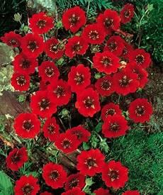 fleur vivace map titecagne