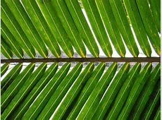 meaning of palm sunday
