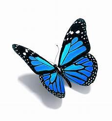 Schmetterling 3d - pin de ingrid en me gustar 237 a blue butterfly