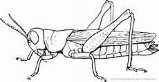 malvorlagen insekten pdf grashuepfer ausmalbilder ausmalbilder grashuepfer mit