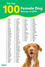 Names good pet what are 76 Uncommon