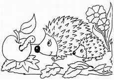 ausmalbilder igel 17 ausmalbilder tiere