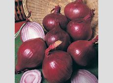 Onion (Heat Treated) Red Baron (Spring Planting) from Mr