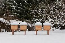 Sterben Bienen Im Winter Landshuter Honig