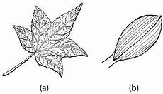 Struktur Dan Fungsi Daun Pada Tumbuhan Gambar