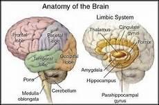 Anatomi Sistem Saraf Cungkringgg S