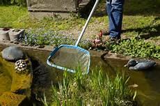 Algen Im Teich Entfernen Algen Im Teich Diese Tipps