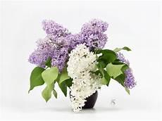 stillleben mit blumenstrau 223 der flieder in einem vase
