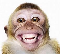 Cara Halau Monyet Yang Lebih Berkesan