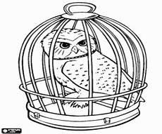 Eule Hedwig Malvorlage Harry Potter Eule Ausmalbilder