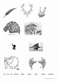 animal parts worksheets esl 14296 animal parts worksheet free esl printable worksheets made by teachers