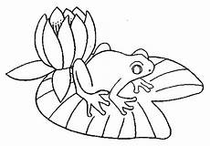 Ausmalbild Frosch Auf Seerosenblatt Frosch Auf Seerosenblatt 2 Ausmalbild Malvorlage Tiere