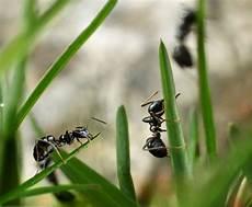 ameisen im wohnzimmer was tun gegen ameisen im haus oder garten zuhause net