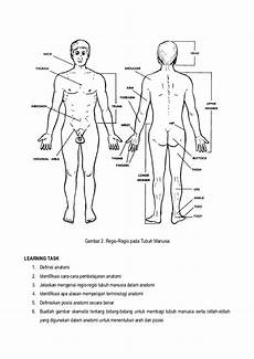 Gambar Posisi Anatomi Tubuh Manusia Kesehatan Anda