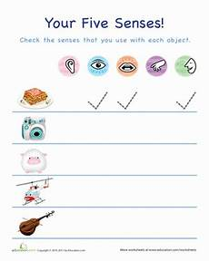 the five senses worksheet education com