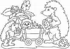 Ausmalbild Hase Und Igel Hedgehog Coloring Pages Ausmalbilder Zum Drucken Igel