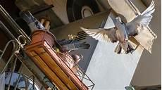 taubenabwehr tauben balkon und fenster vertreiben