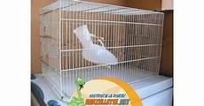 pappagallo in gabbia barzellette net foto pappagallo in gabbia
