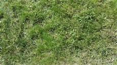 vertikutieren im fr 252 hjahr luft f 252 r den rasen garten mix