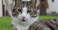 Was Tun Gegen Katzen Im Garten - was tun gegen katzenkot im garten katzenkot