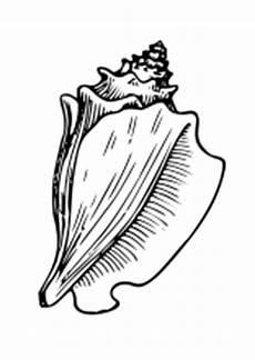 Malvorlagen Fische Muscheln Ausmalbilder Fische Krebse Seepferdchen Kraken Quallen