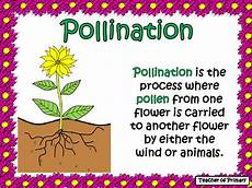 the life cycle of a flowering plant powerpoint and worksheet life cycles planting flowers