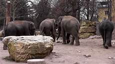 am zoo tierwelt elefanten im zoo heidelberg teil 2