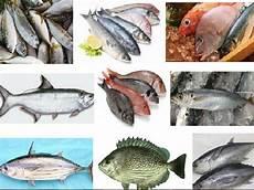 Nama Nama Ikan Maritim Dangkal Dan Dalam Dapat Dikonsumsi