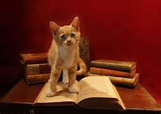 Welches Haustier Passt Zu Mir - welches haustier passt zu mir vielleicht eine katze