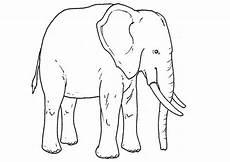 Ausmalbilder Asiatischer Elefant Elefanten Ausmalbilder 08 Ausmalbilder