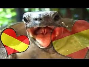 Tortugas Follando