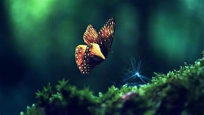 Butterfly Wallpapers Laptop 3d Backgrounds Pc Background