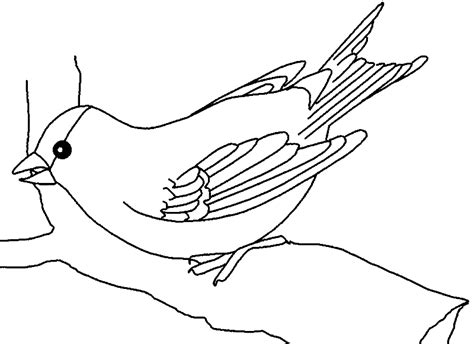 Wunderschöne vögel bastelvorlagen zum ausdrucken ☆ kostenlos herunterladen und ausdrucken ✓ hier klicken ▶ und mehr erfahren ◀ viele vorlagen und diy ideen. Vogel malvorlagen kostenlos zum ausdrucken - Ausmalbilder vogel #2013861 - AffeFreund.com