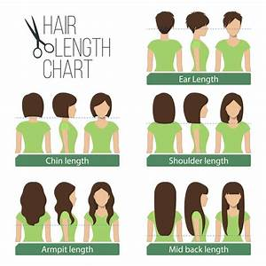 5 Women U0026 39 S Hair Lengths Explained  Charts  U0026 Diagrams