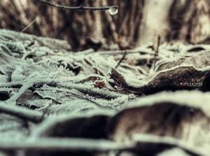 Mystical soil of winter forest by Piroshki-Photography on ...