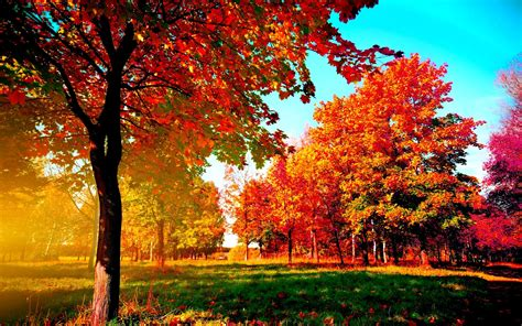 Autumn Fall Backgrounds Computer by Fall Wallpapers For Computers 53 Images