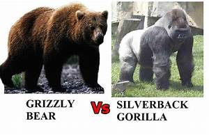 Tao of Pauly: Grizzly Bear vs. Silverback Gorilla